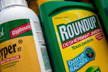 """""""Le glyphosate n'est pas cancérigène"""" a déclaré l'Agence Européenne des produits chimiques"""
