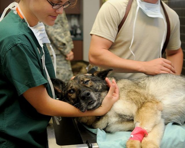 La médecine vétérinaire plus exigeante et moins polluante que la médecine humaine ?