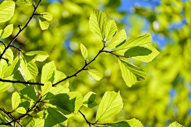 Comment est élaboré un Plan Régional de Santé Environnementale(PRSE)?