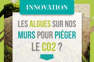 Les algues sur nos murs pour piéger le CO2