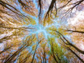 investissements ONU changement climatique