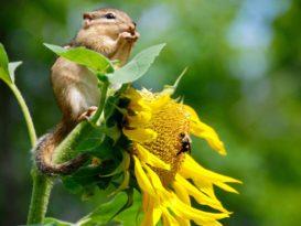 biodiversité enjeux et priorités