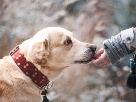 covid19 chien dépistage