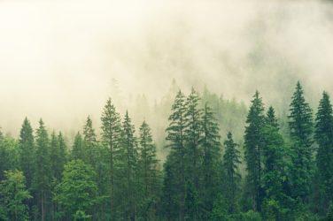 déforestation cause de zoonose