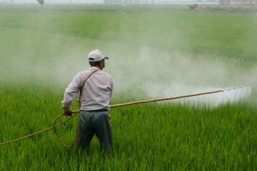 Homme qui déverse du pesticide